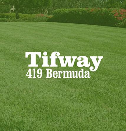 Tifway Square